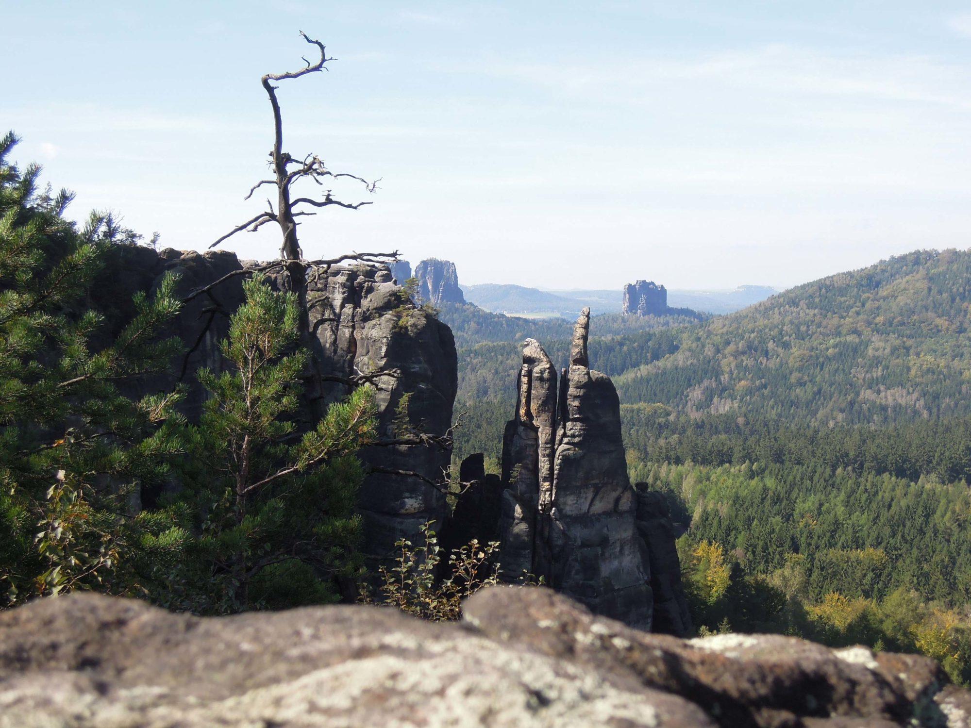 Bergfinken Dresden e.V.